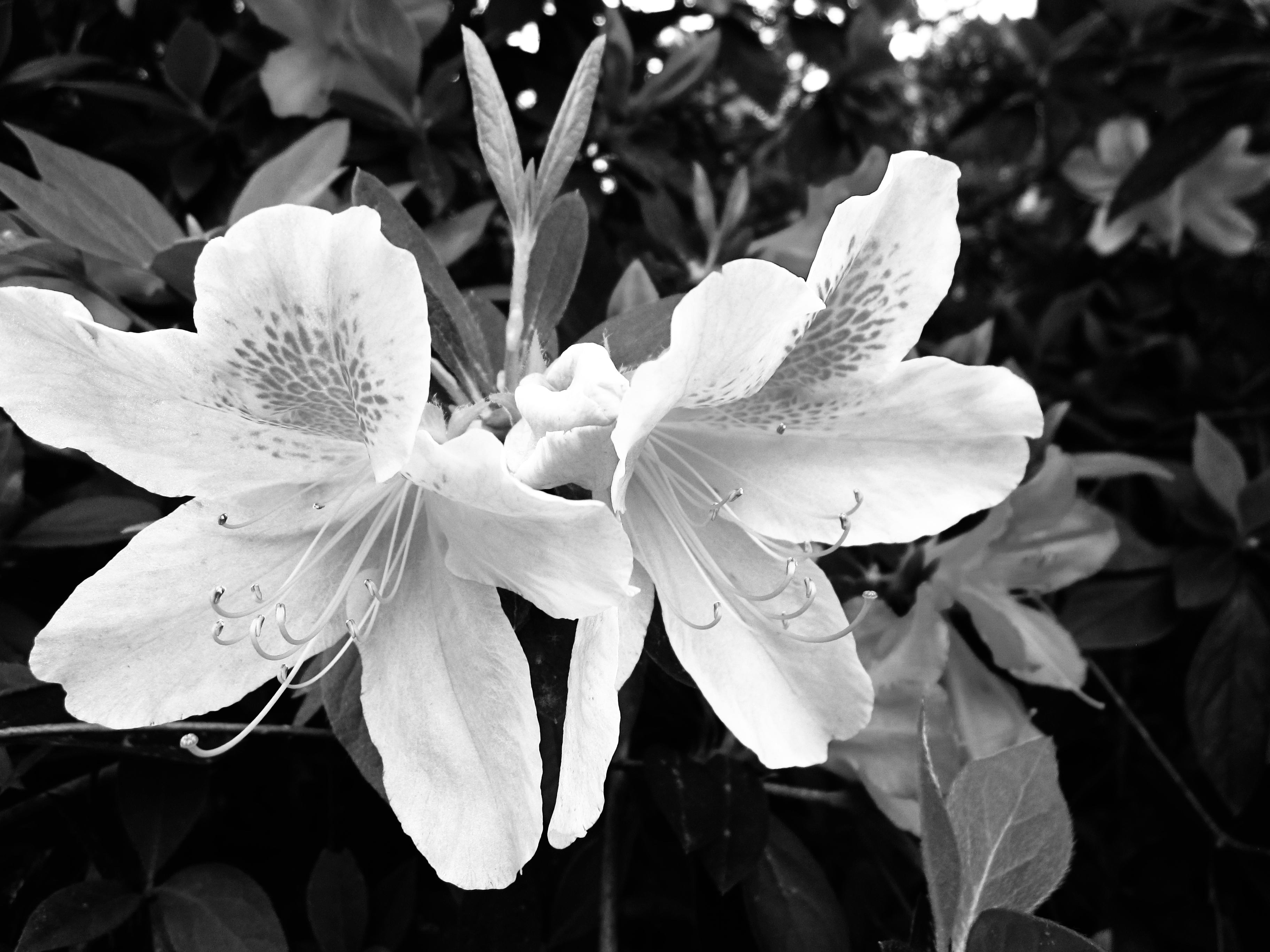 Black And White Photography With Color Flowers 2018 Images