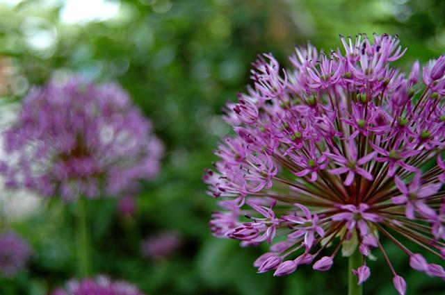 Longmont Flowers
